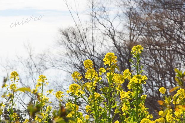 写真: 吾妻山公園-165