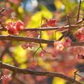 写真: 吾妻山公園-169