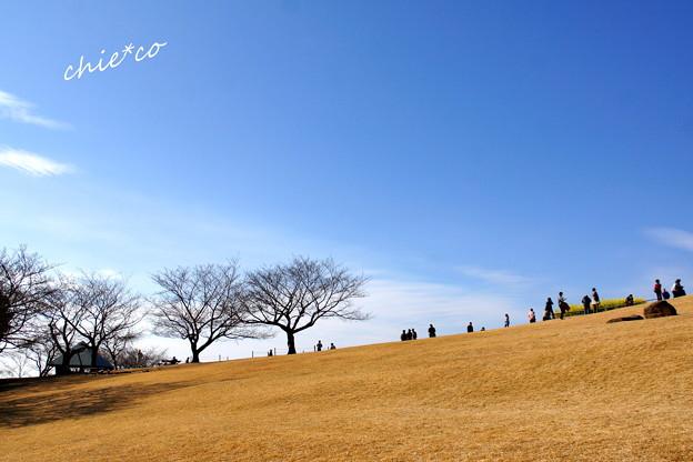 吾妻山公園-178