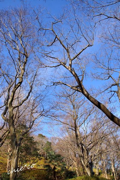 吾妻山公園-183