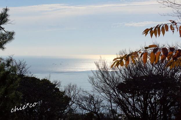 吾妻山公園-184