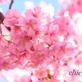写真: DSC00952-001
