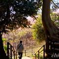 写真: 三浦海岸~河津桜~-196