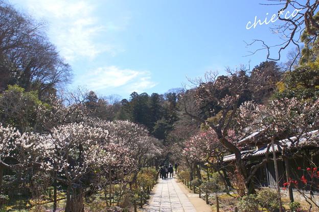 北鎌倉-435