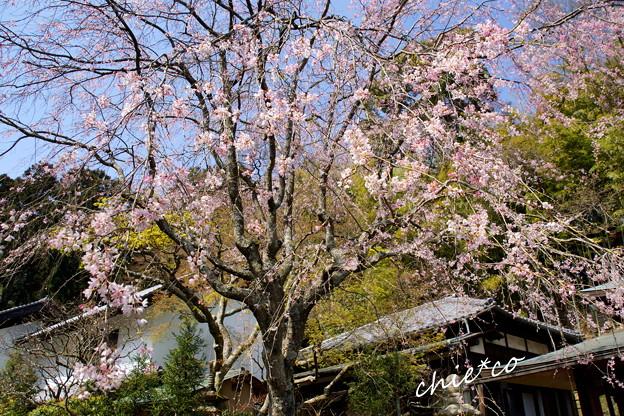 北鎌倉-306