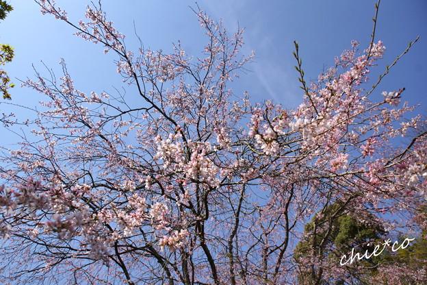 北鎌倉-314