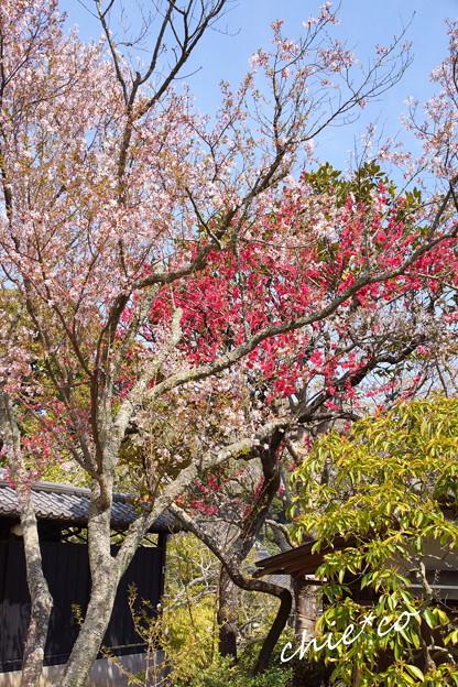 北鎌倉-348