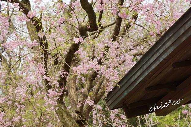 鎌倉-663