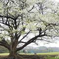写真: 根岸森林公園-098