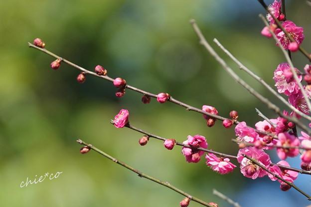 写真: 鎌倉-224
