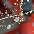 写真: 鎌倉-223