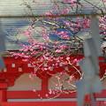 写真: 鎌倉-220