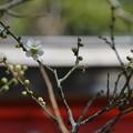 写真: 鎌倉-213