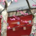 写真: 鎌倉-205