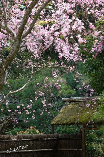 写真: 鎌倉-460