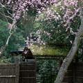 写真: 鎌倉-457