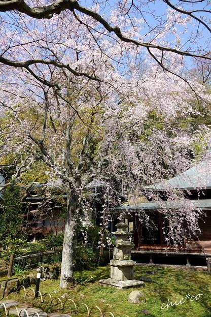 写真: 鎌倉-440