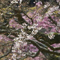 写真: 鎌倉-444
