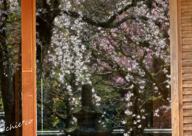 写真: 鎌倉-445
