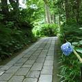 写真: 鎌倉-093