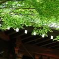 写真: 鎌倉-106
