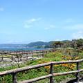 写真: 佐島-047