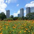 Photos: 浜離宮恩賜庭園-162