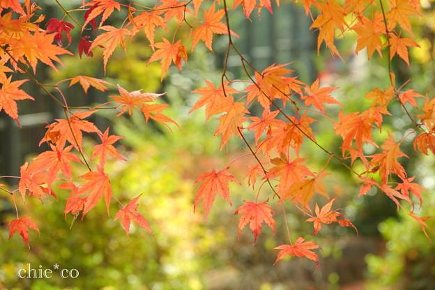 岡田美術館庭園-079