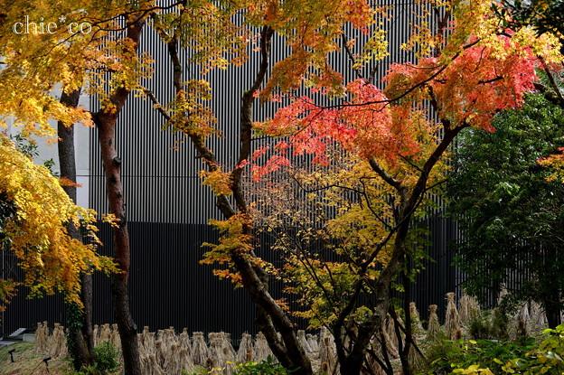 岡田美術館庭園-068