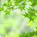 久良岐公園-091