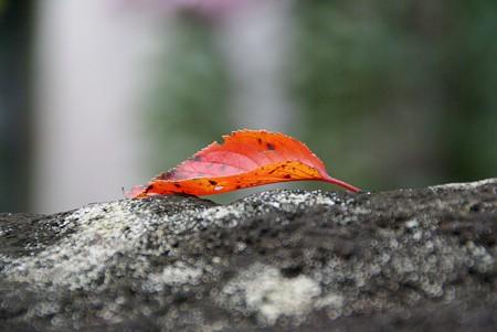 一葉。。。。