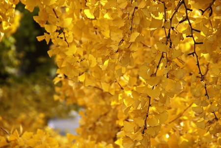 Yellow・・・ 初冬の横浜スケッチ