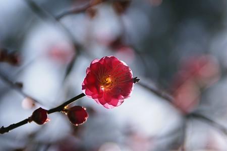 花びらが可愛いね~~~♪