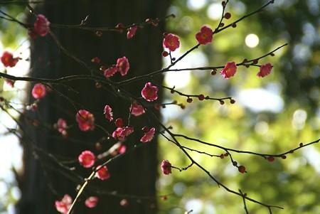 光の中の梅模様~♪
