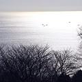 写真: 穏やかな海・・  吾妻山公園にて・・