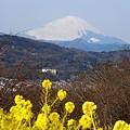 写真: 富士をのぞむ・・吾妻山にて・・