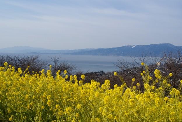 写真: 菜の花と・・海と・・♪   吾妻山にて・・