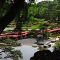Photos: サツキ咲く日本庭園・・