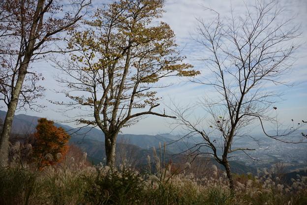 写真: DSC_4673