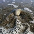 波にさらわれる貝殻