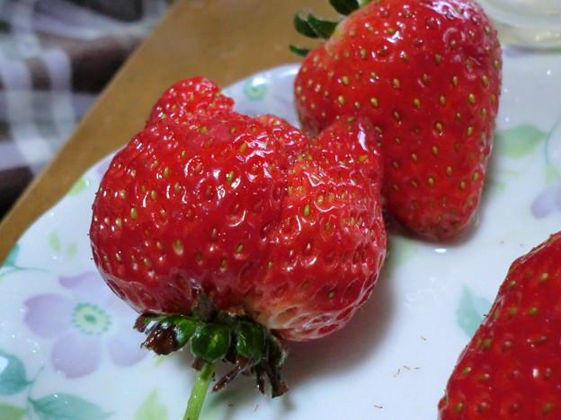 ネコ耳苺?