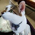写真: 伸びあがりハナちゃん