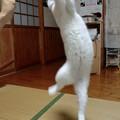写真: jumpingdance