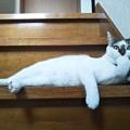 写真: 考えるネコ