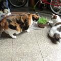写真: 猫草争奪戦