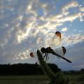 写真: トンボと秋の空
