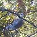 写真: 窓辺の鳩