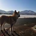 Photos: 雪の日の散歩