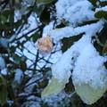 Photos: 氷の果実