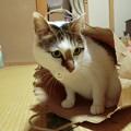 Photos: いたずら三昧